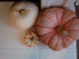 Four Fall Home Decor Favorites
