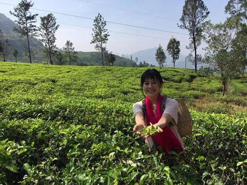 スリランカの茶園にて。茶摘み体験を。