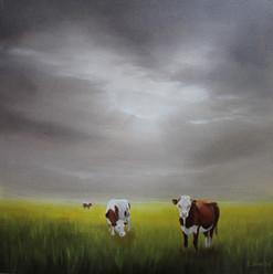 Drei Kühe