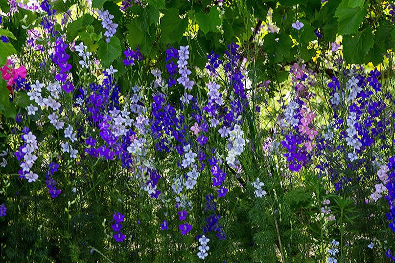 Blumenimpression