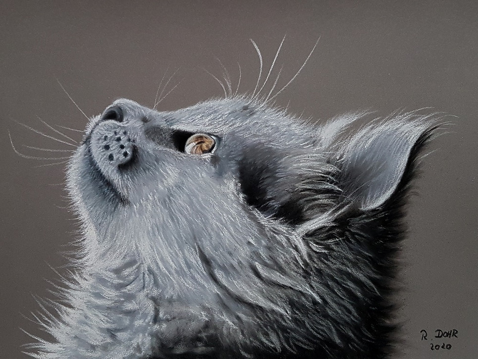 Katzenaugenblick
