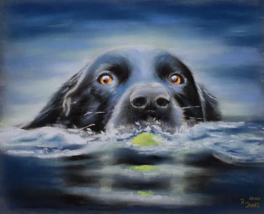 Labby schwimmt