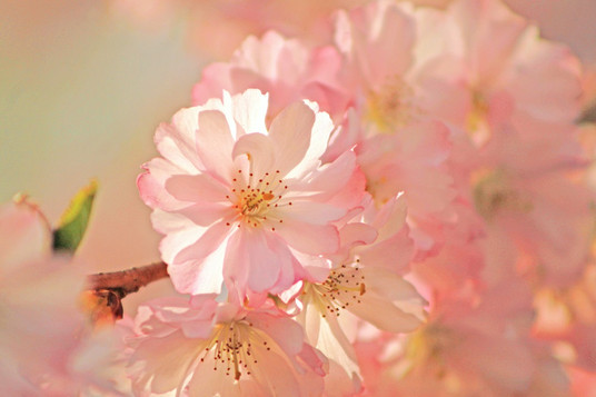 Traumblüten