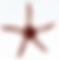 New TMIF Starfish Desktop.png