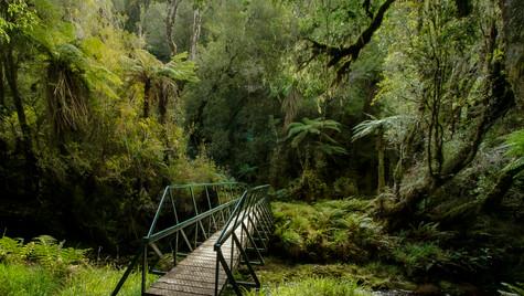 Stewart Island | New Zealand