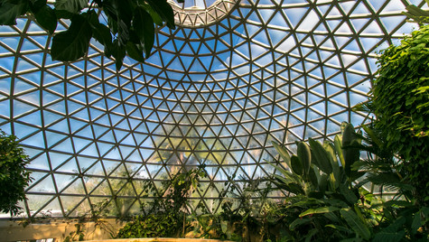 Mount Coot-tha Botanical Gardens   Australia