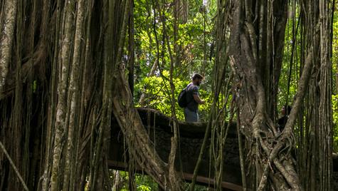 Monkey Forest | Bali