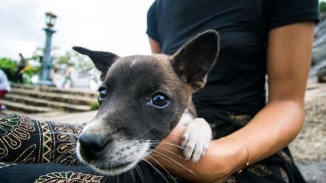 street dog in Sri Lanka