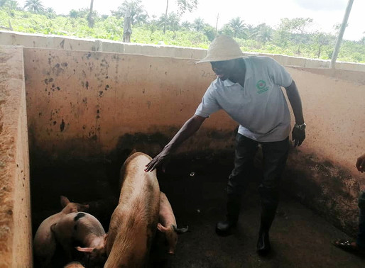 Challenges for emerging small-scale livestock farmers in Nigeria
