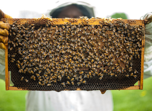 The challenges of being a beekeeper
