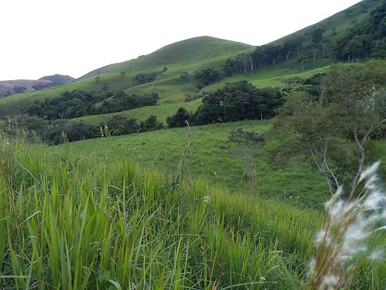 Fazenda em Santa Rita de Jacutinga - MG