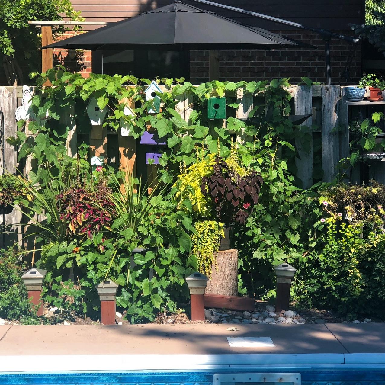 0923late behind pool
