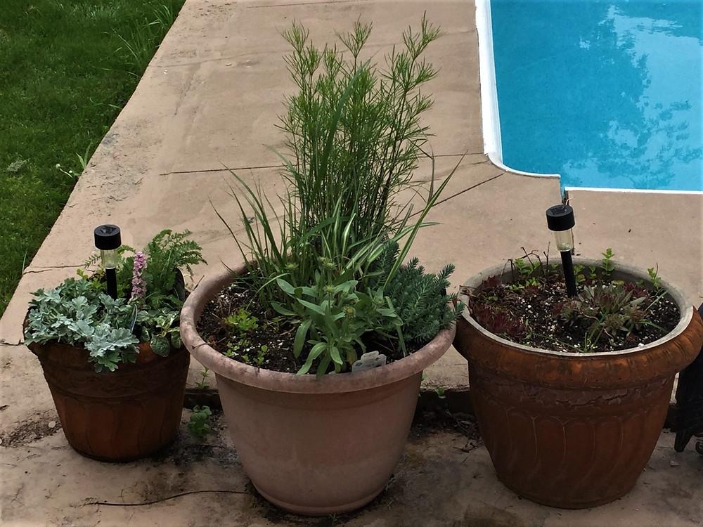Pool Planters