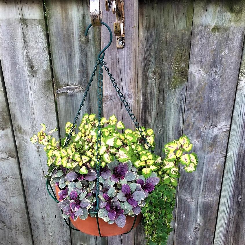 garden pot 1