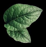 feuilles.webp