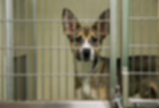 donate puppy 2.jpg