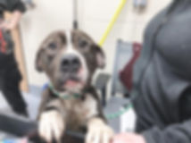 donate puppy.jpg