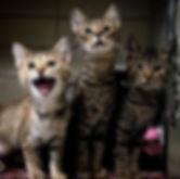 cat4_edited.jpg