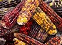 Corn by Elizabeth Studio