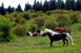 wild ponies tour