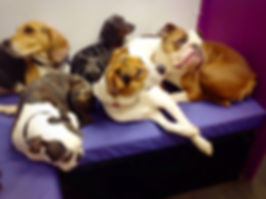 Central london pet shop, grooming salon, doggy daycare center, W1 pet dog groomers,