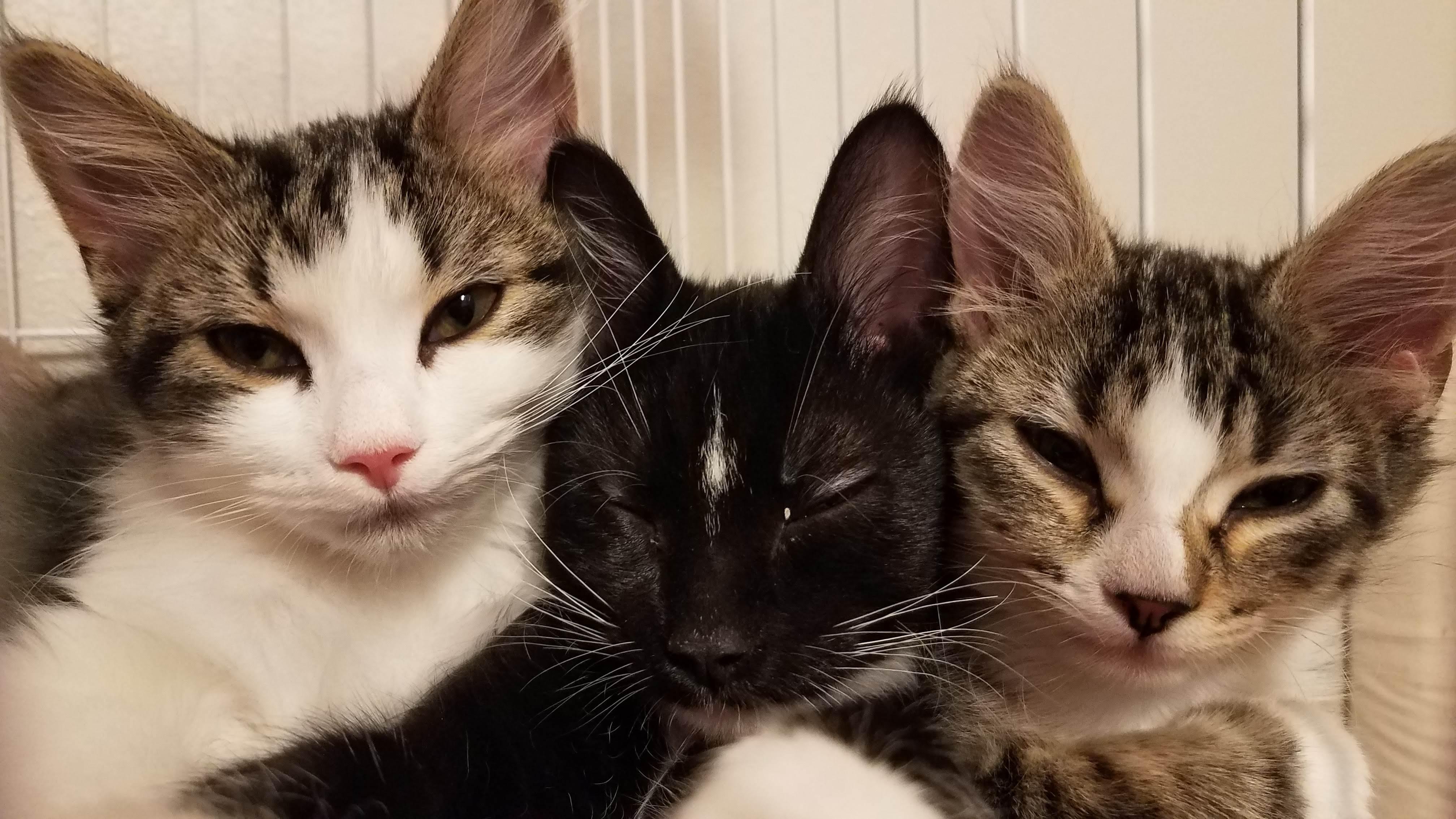 Kittens 3