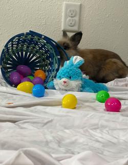 Bunny 10