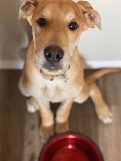 Feed A Rescue Dog