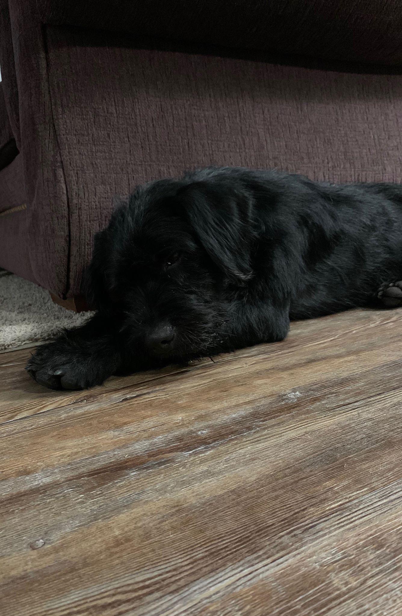 Black Dog 2