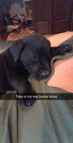 Tripp 3