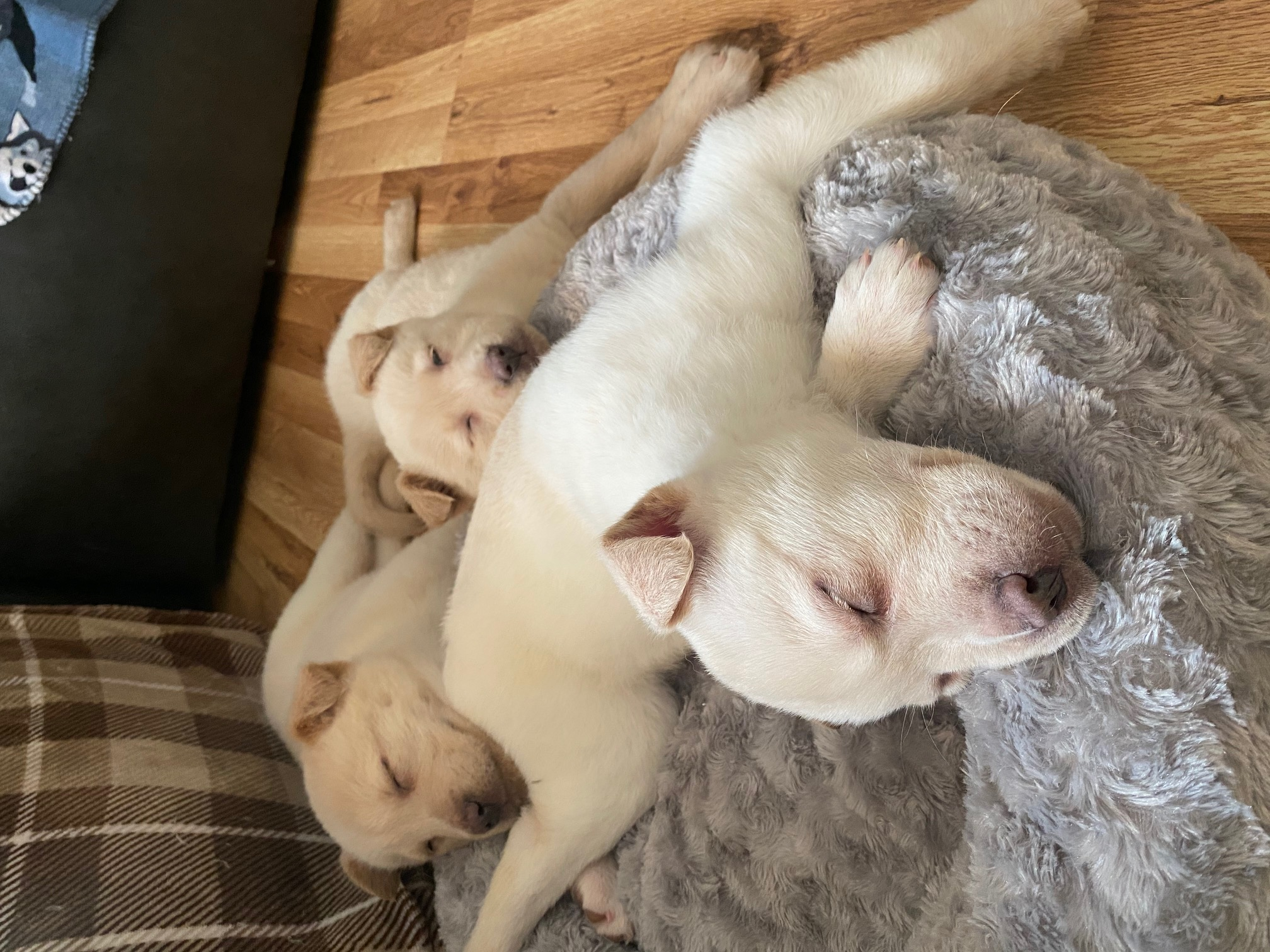 Pups 7