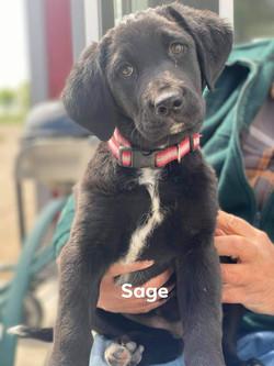 Sage 3