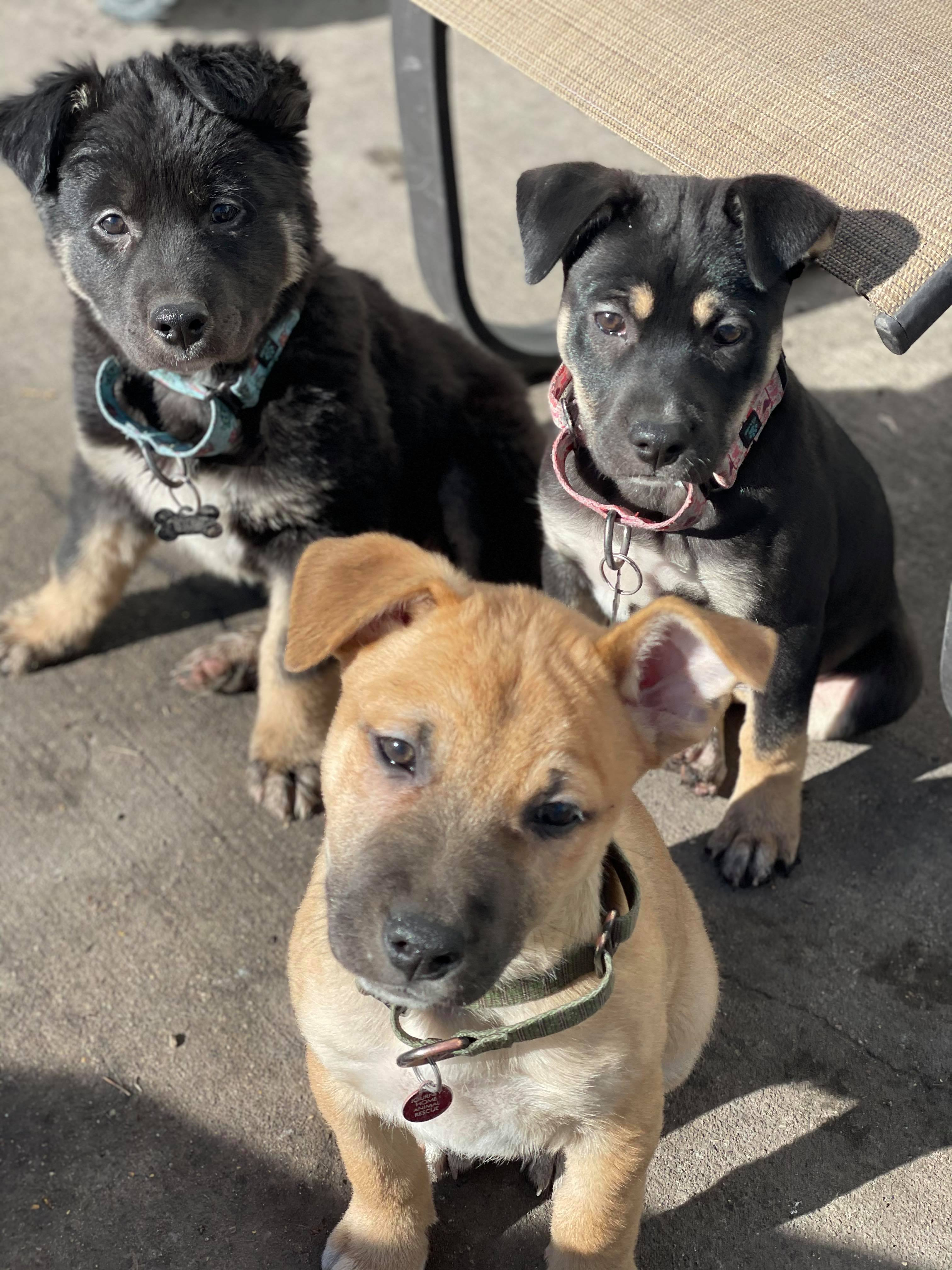 Choc Pups 2
