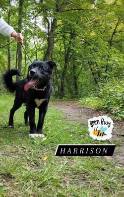 Harrison 5