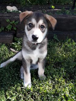 Dakota 3