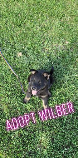 Willber 2