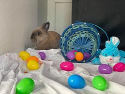 Bunny 11