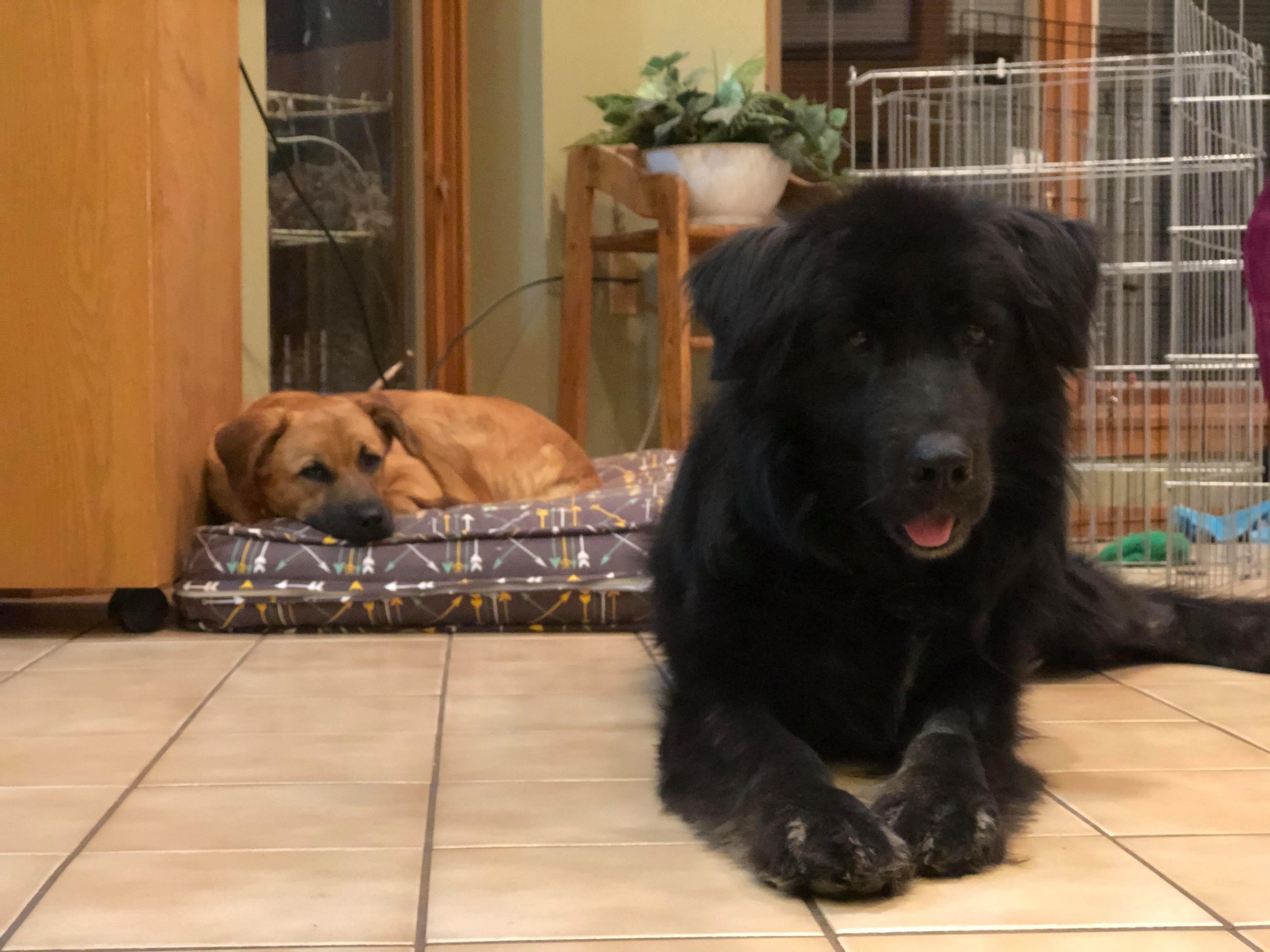Houston and Biggie