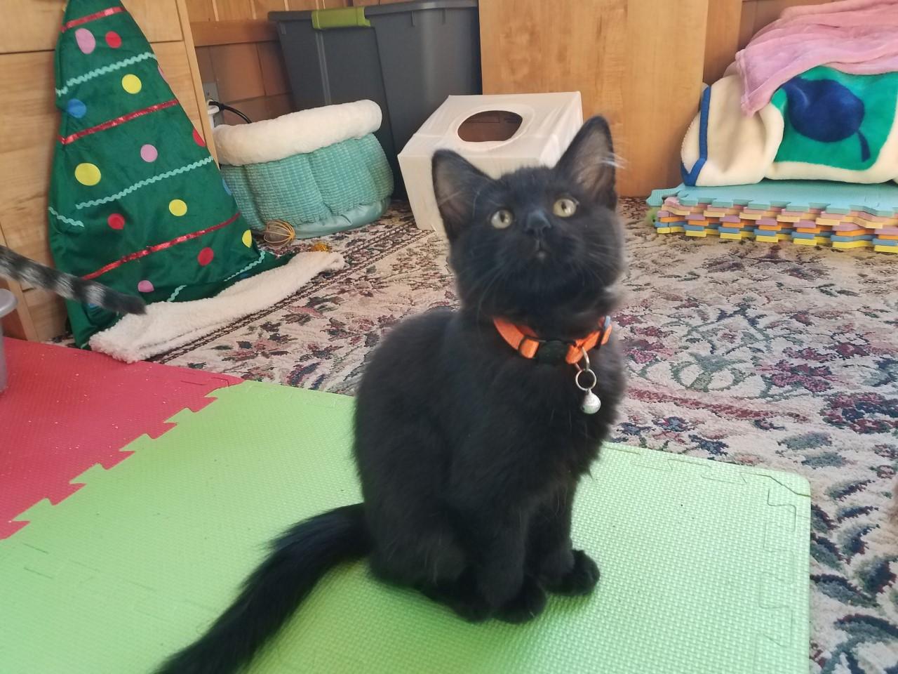 Ash cat3