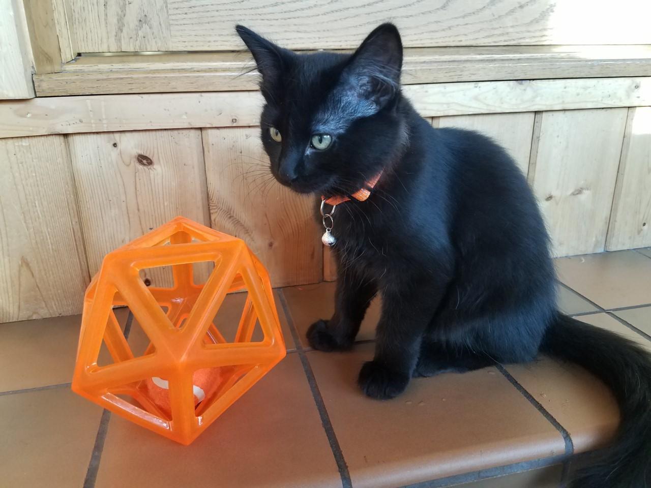 Ash cat5