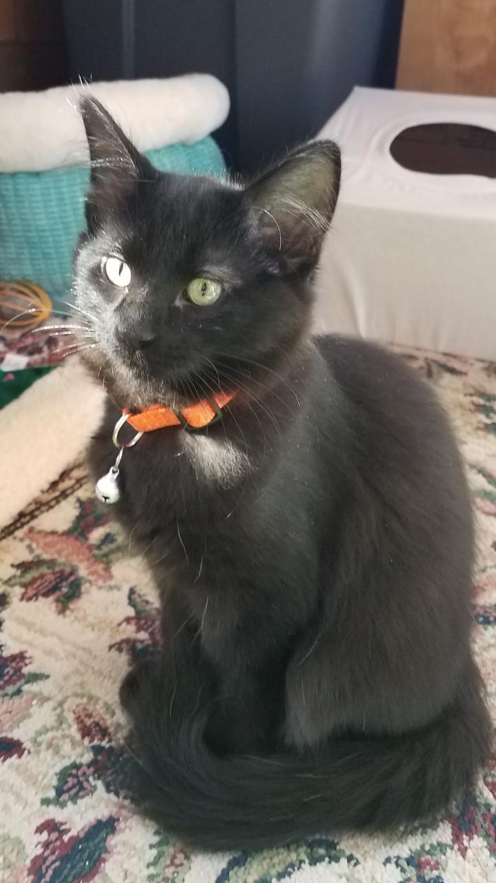Ash cat4
