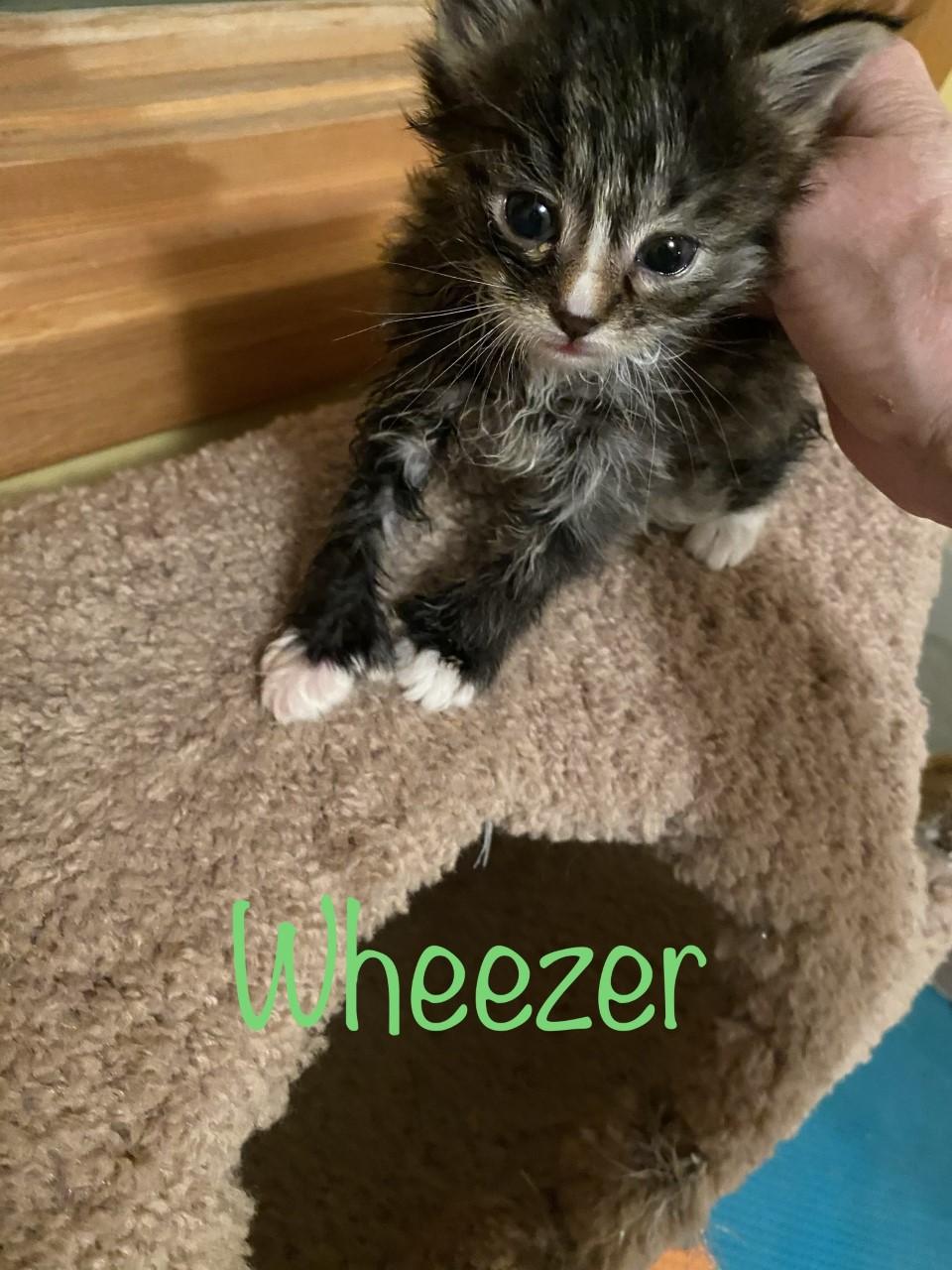 Wheezer