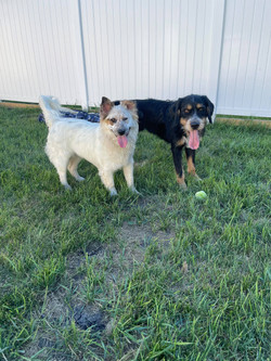 Nilla and Goofy