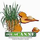 iguacanne.jpg