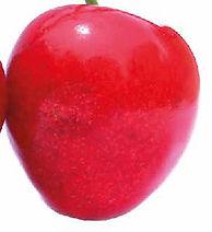 Cherry Close Up Gradient Mesh Tutorial