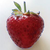 Pen Tool Outline Closed Shape Adobe Illustrator Free Tutorial