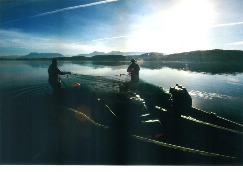 Zugnetzfischer am Waginger See - Sascha