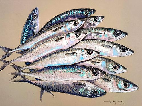 Portrait of Fish - Mackerel