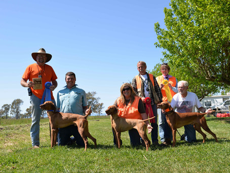 Our Vizslas at the GSPC of NSV