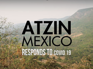 Atzin Continues Strong Response to Covid in 2021